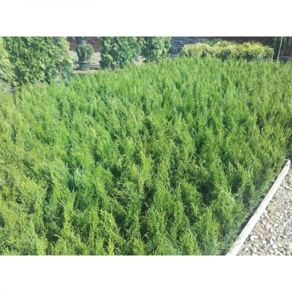 smaragd_30-40cm2